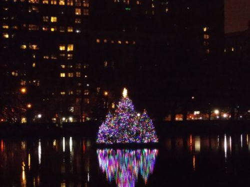 Harlem Meer Tree